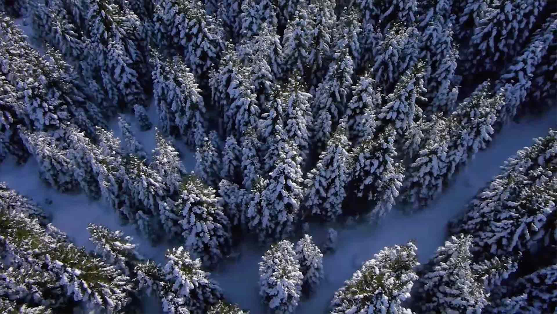 aerial view of distant forest