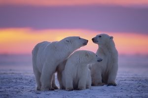 Artic conditions